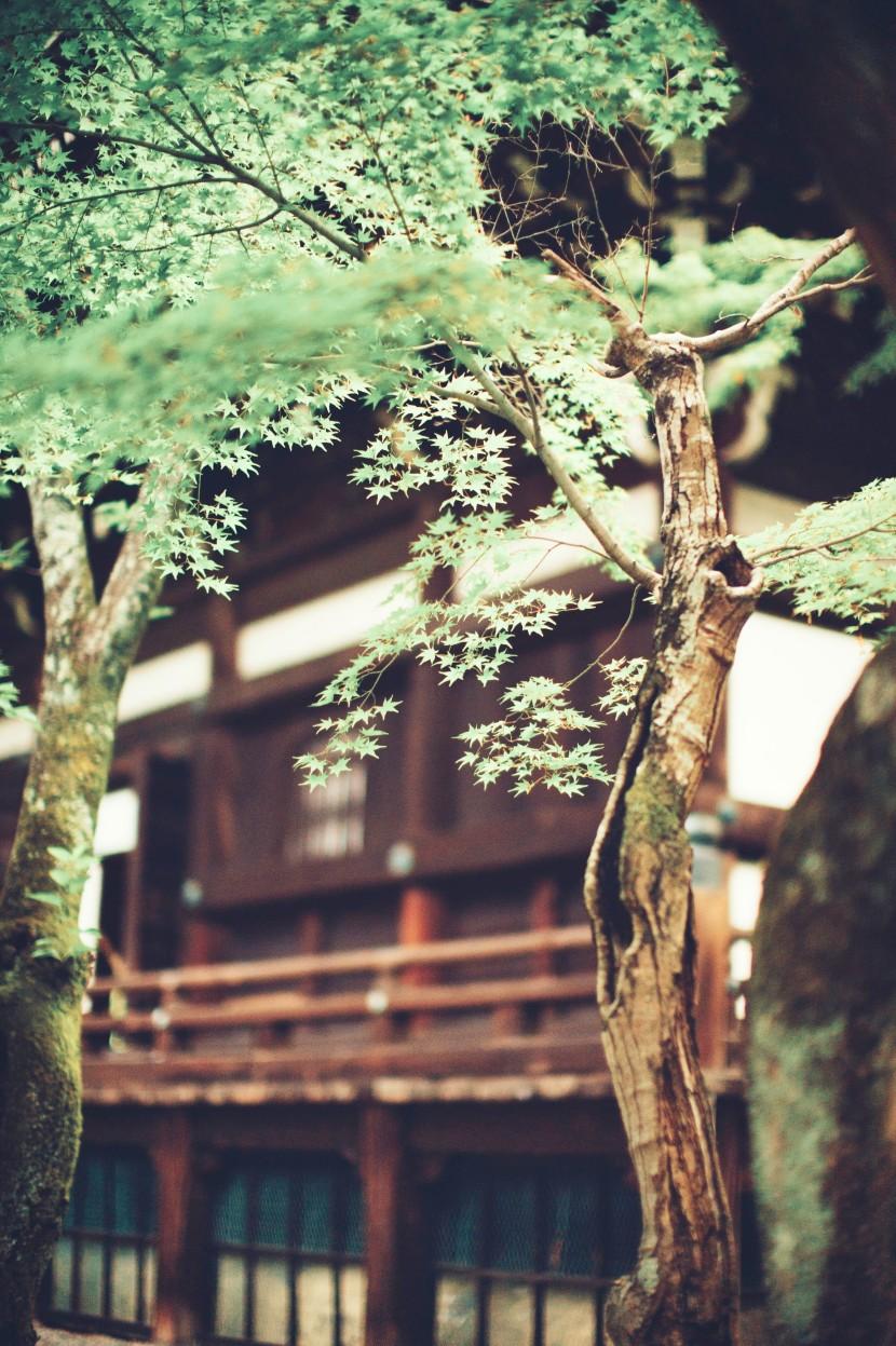 kyoto_june_2019_0060